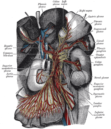 "By Henry Vandyke Carter - Henry Gray (1918) Anatomy of the Human Body (See ""Book"" section below)Bartleby.com: Gray's Anatomy, Plate 848, Public Domain, https://commons.wikimedia.org/w/index.php?curid=541708"