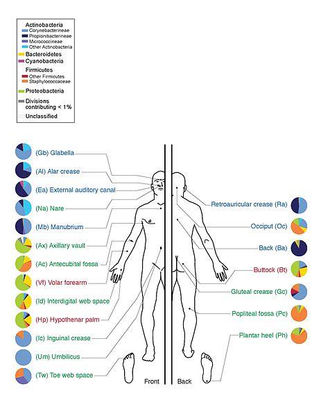 skin_microbiome20169-300