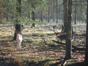-74- Tierpark im Burgwald
