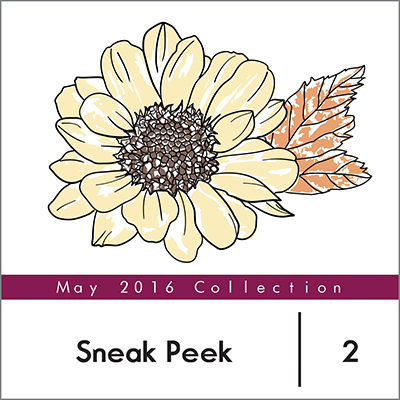 spring daisy sneak peek