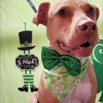 Kara's dog, Lukas