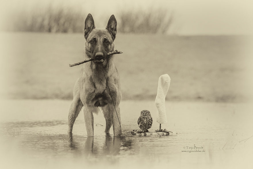 ingo-else-dog-owl-friendship-tanja-brandt-3