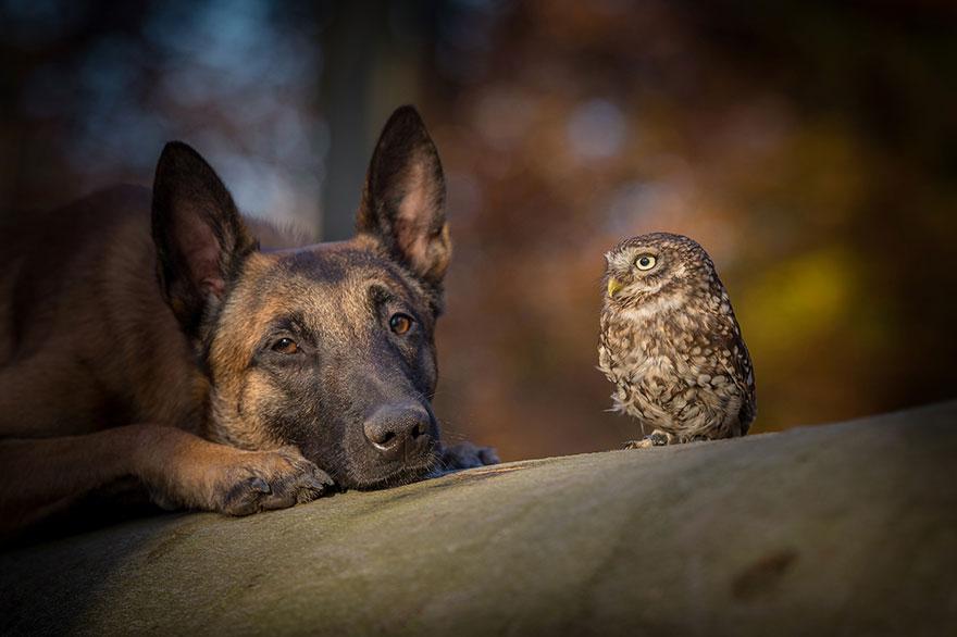 Dog And An Owl Friendship
