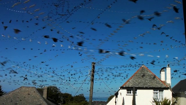 This Is How Many Seagulls Fly Past a Single Window In An Hour