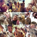 """The Genial Quokka """"The Happiest Animal In The World"""""""