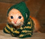 36 Cute Pictures Of Animals In Sweaters Will Totally Make Your Day!