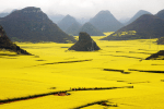 Beautiful Canola Flower Fields in China