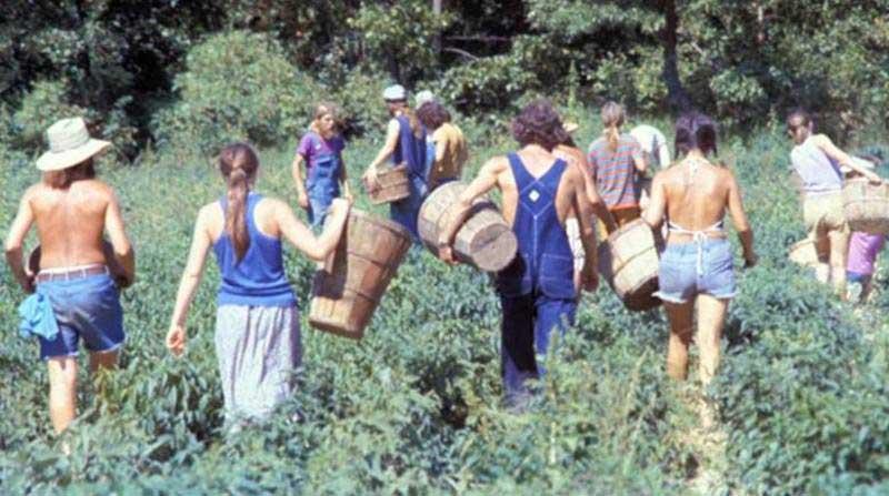hippie-commune-the-farm-harvest