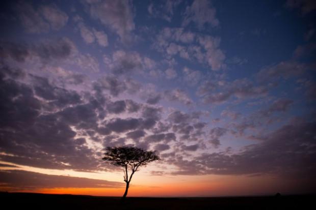 masai-mara-goldstein-4