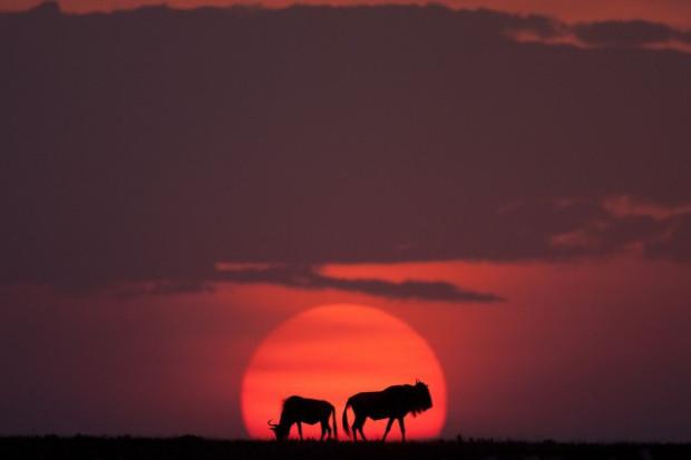 masai-mara-goldstein-9