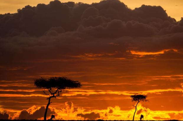 masai-mara-goldstein