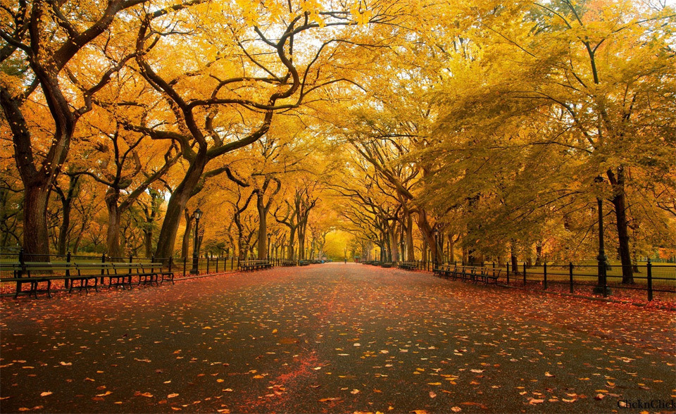 Beautiful Trees - Autumn in Central Park, New York