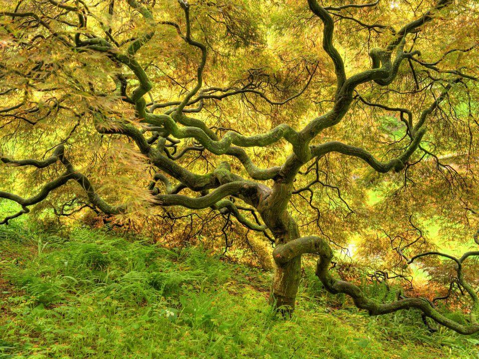 Beautiful Trees - Golden tree