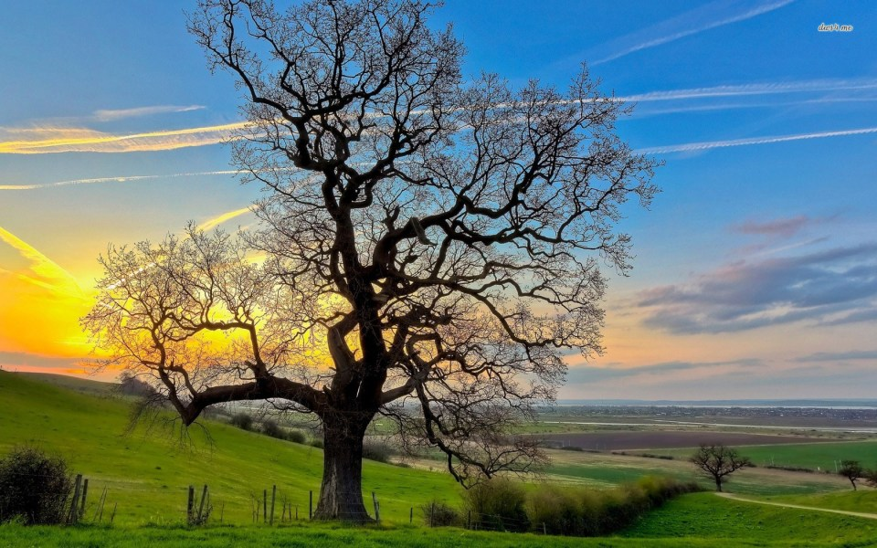 Beautiful Trees - Old Tree