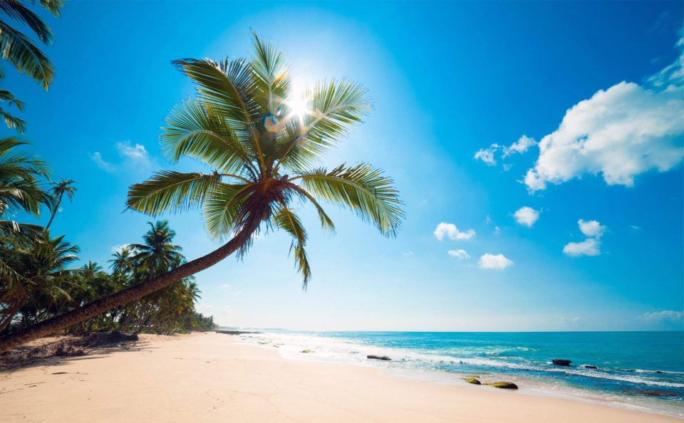 Beautiful Trees - Palm on the beach