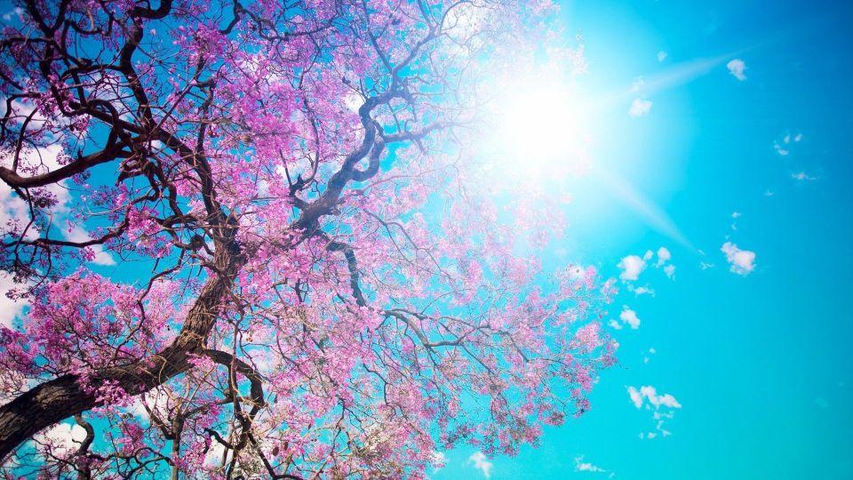 Beautiful Trees - Spring flowers