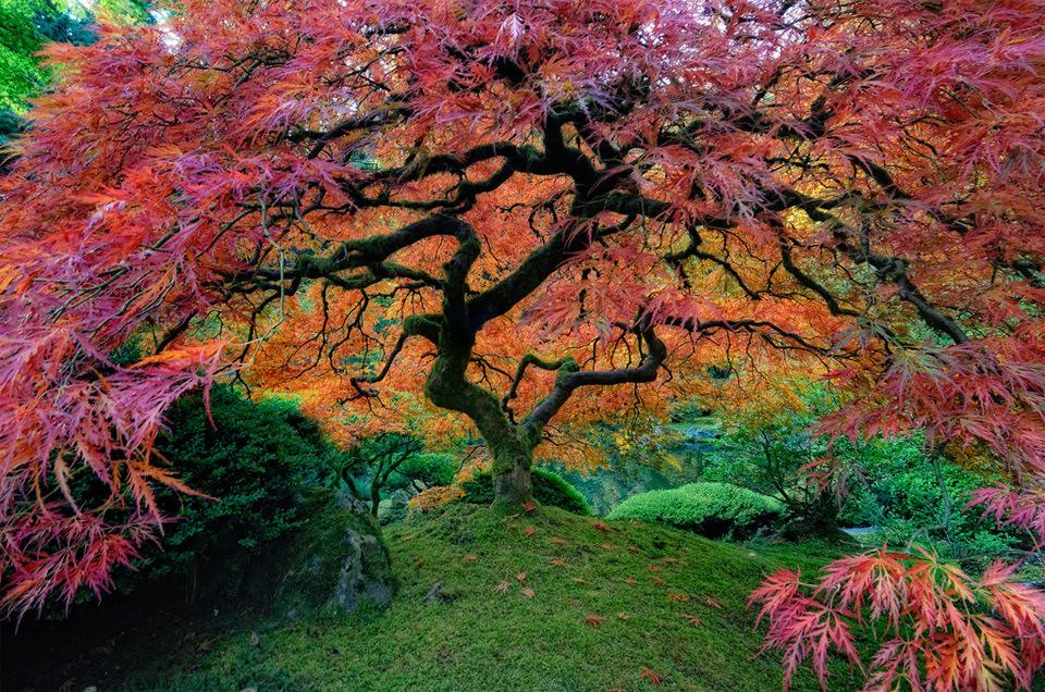 Beautiful Trees - The Portland Japanese Garden
