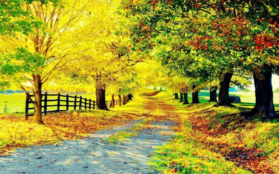 Beautiful Trees - Yellow-green Trees