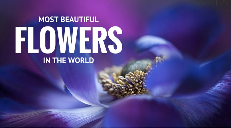32 Most Beautiful Flowers In The World