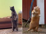 23 Hilarious Photos Of Cats Standing Up