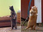 23 Hilarious Photos Of Cats Standing Up