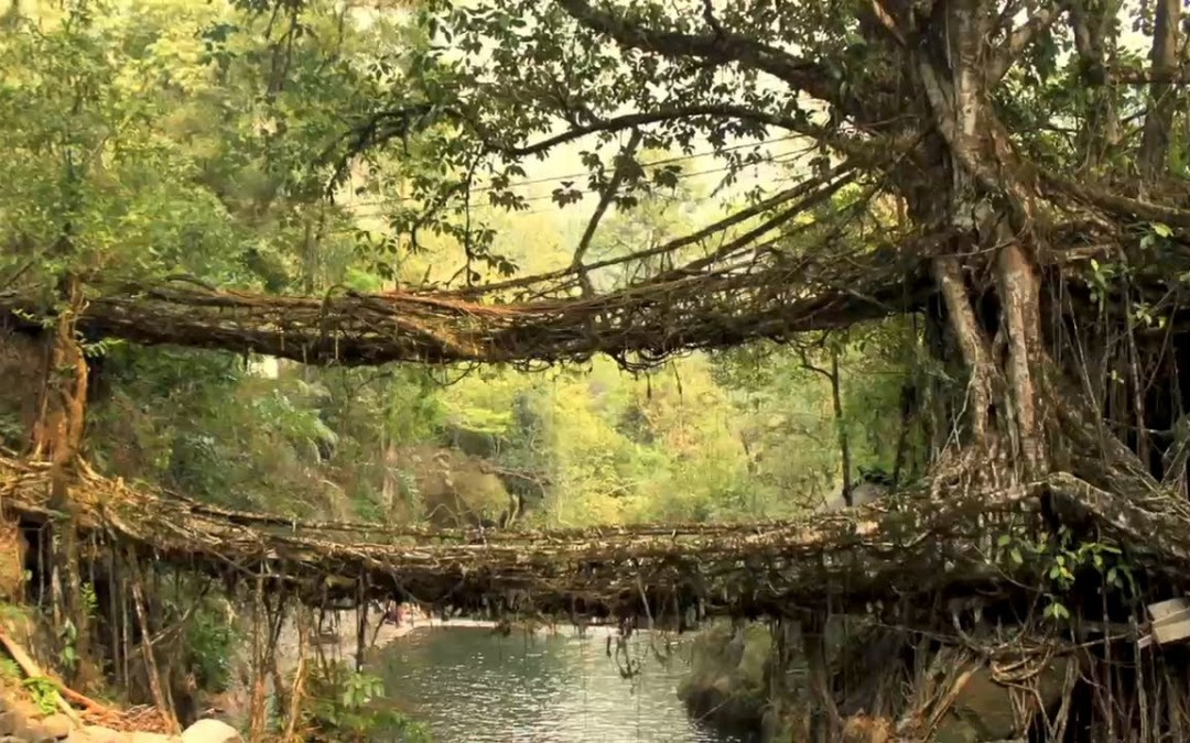INDIA'S LIVING BRIDGES
