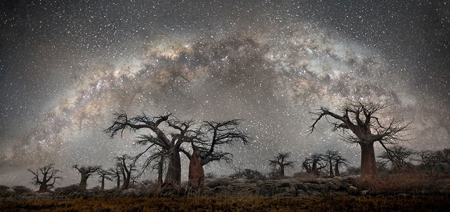 Magical Photos Of The World's Oldest Trees At Night; By Beth Moon