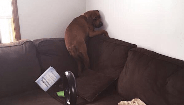 16 Dogs Terrified Of Completely Normal Things