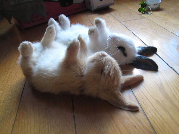 The Cutest Bunnies Ever