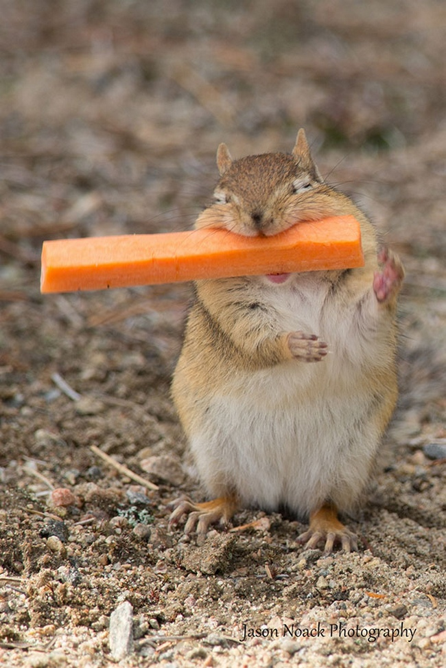 Photos Of Animals Eating That'll Make You Smile - 15