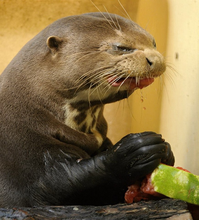 Photos Of Animals Eating That'll Make You Smile - 6
