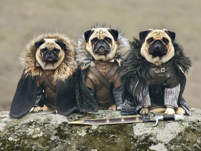 10 Cosplaying Pets That Are Better  Than Their Humans