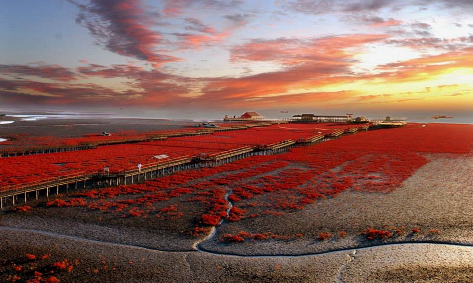 The Red Beach in China