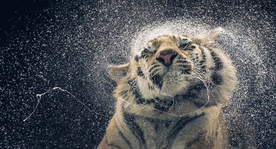 30 Marvelous and Breathtaking Animal Photographs