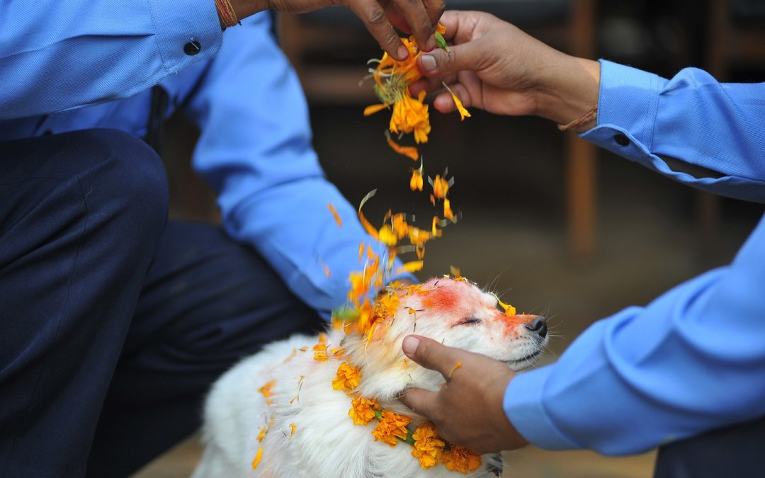 Nepalese Tihar Festival Honors Dogs in the Most Wonderful Way