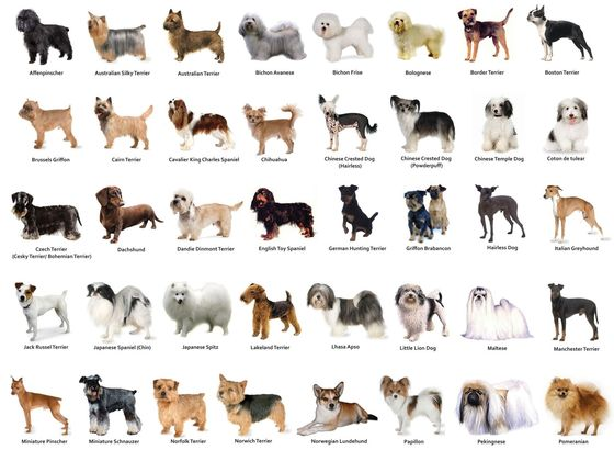 What Dog Breed Are You? quiz
