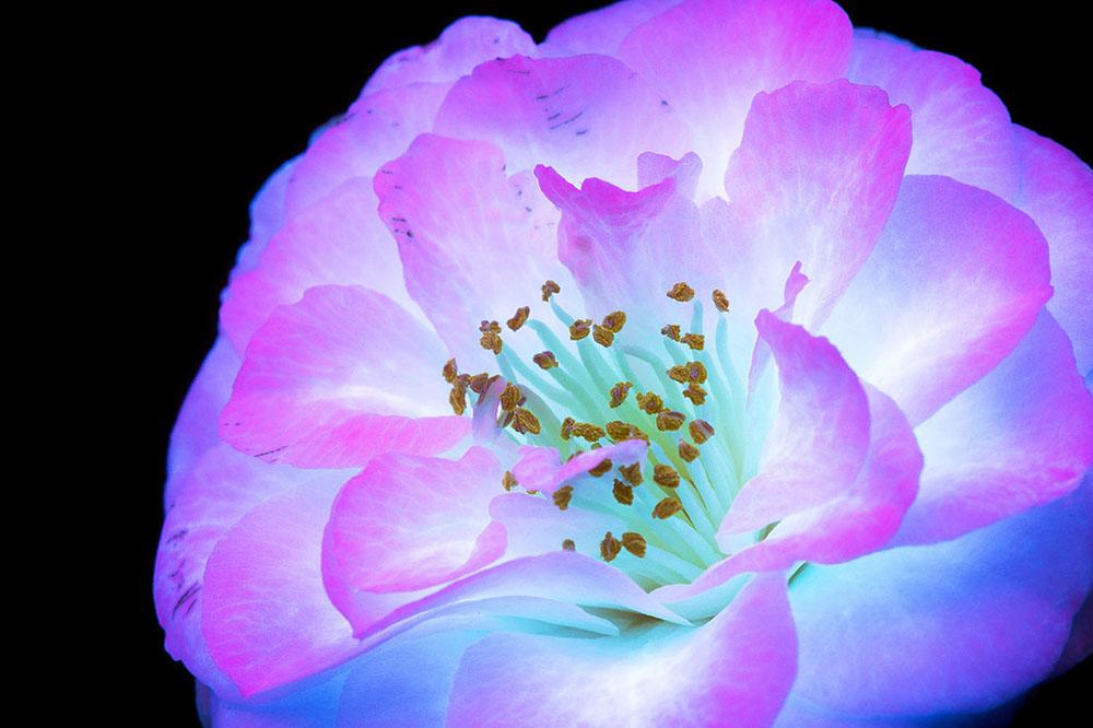 Glowing Flowers 3
