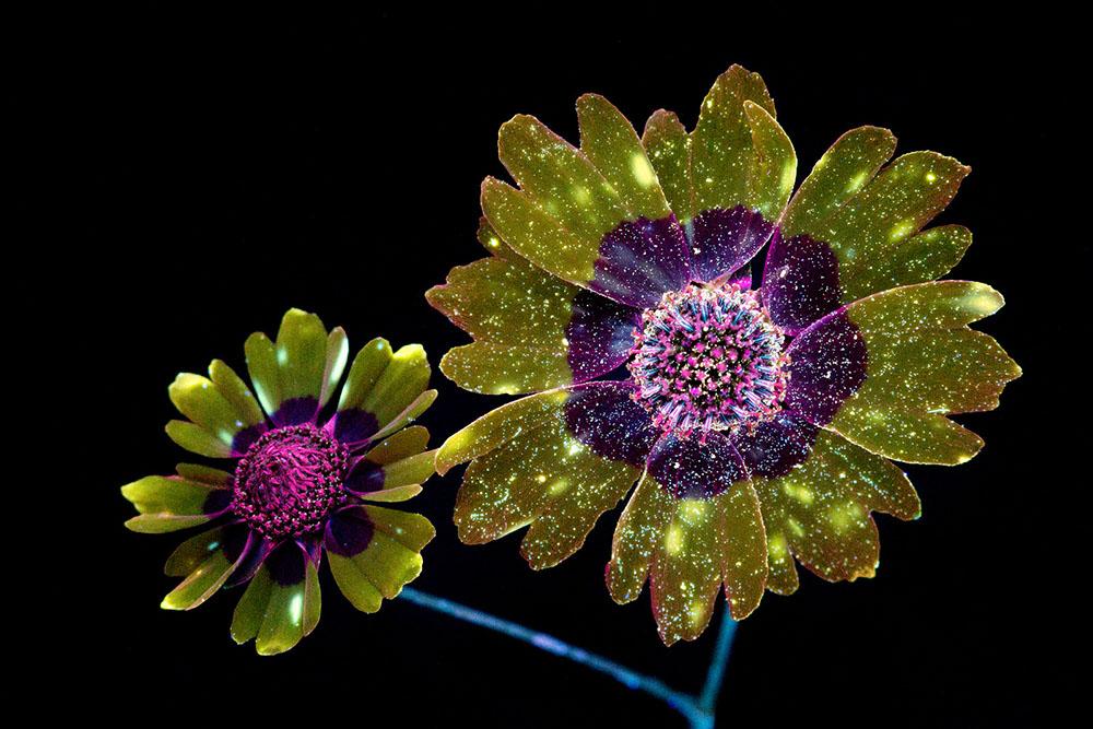 Glowing Flowers 4
