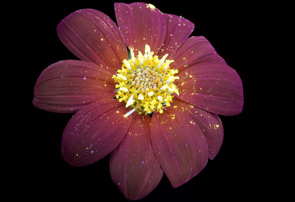 Glowing Flowers 5