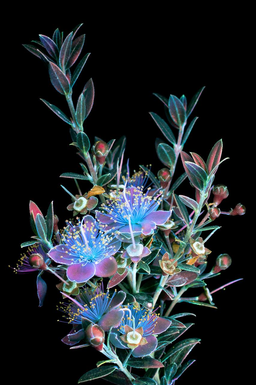 Glowing Flowers 8