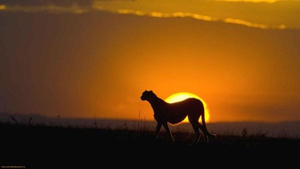 beautiful sunsets 11