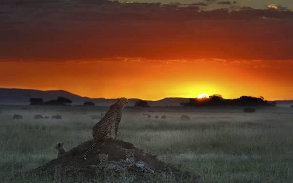 beautiful sunsets 13