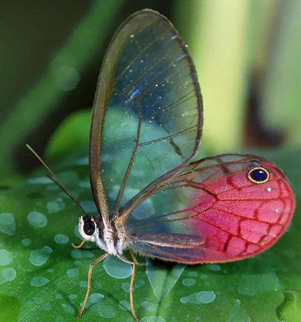 transparent-animals