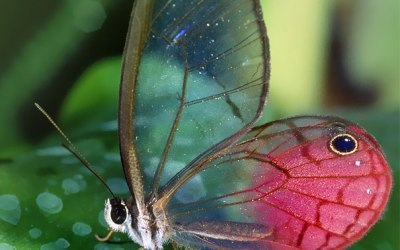 Way Too Transparent Animals Which Are Hard To Believe That Actually Exist