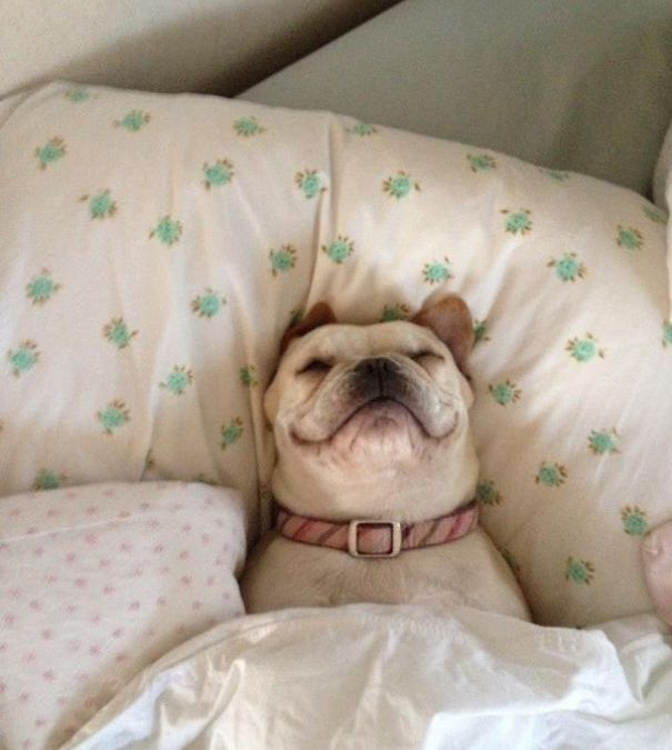 20 Sleepy Dogs Who're Definitely Not Letting You Sleep In Your Bed Tonight