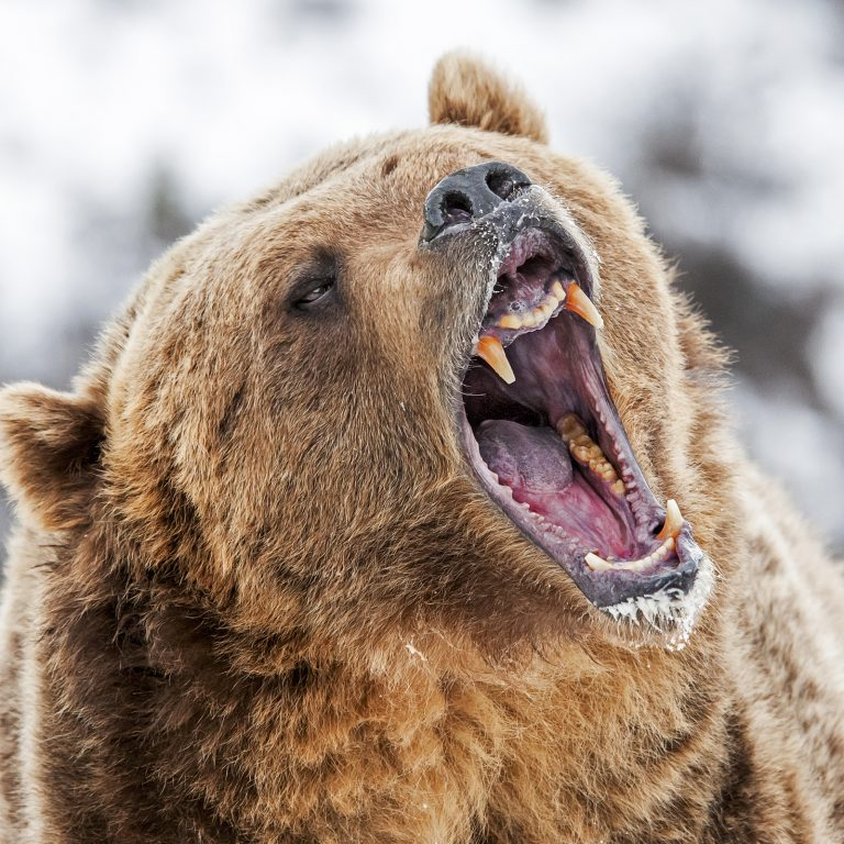 Markets Update: Bear Market Adds Cryptocurrency Trading Uncertainty