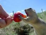 Animals Eating Berries Look Like Horror Movie Monsters