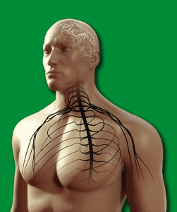 The Endocannabinoid System and Nervous System