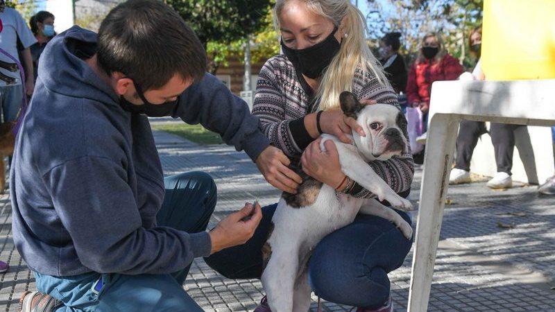 El Municipio celebró el Día del Animal con un operativo de castración y vacunación en la Plaza San Pablo