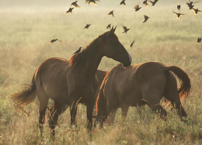 Horses by hofhauser